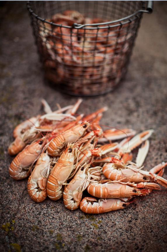 Crayfishes